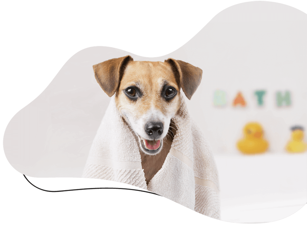 https://www.poochedpaws.co.uk/wp-content/uploads/2021/03/hero_image_01.png