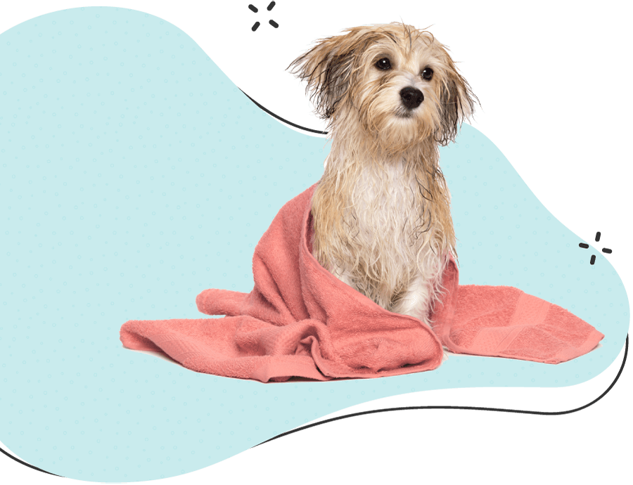 https://www.poochedpaws.co.uk/wp-content/uploads/2021/03/hero_image_12.png