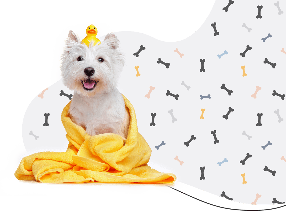 https://www.poochedpaws.co.uk/wp-content/uploads/2021/03/hero_prices.png